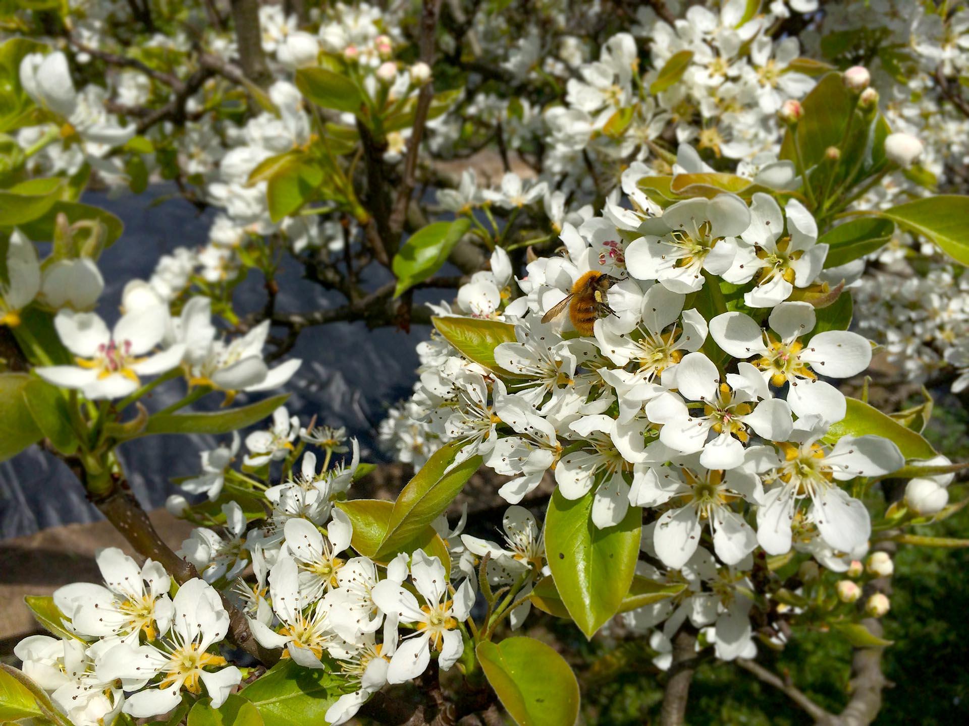 Carnet para la aplicación de productos fitosanitarios