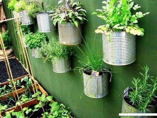 Cultiva y recicla en paredes y contenedores con plantas aromáticas y medicinales